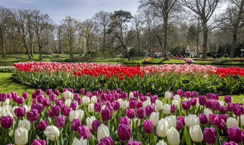 Titelbild der Reise Thurgau Silence: Rhein-Kreuzfahrt zur Tulpenblüte